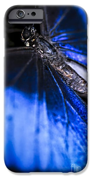 Antennae iPhone Cases - Blue Morpho butterfly with open wings iPhone Case by Elena Elisseeva