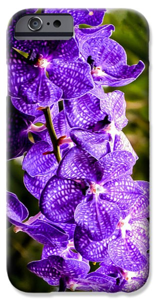 Floral Photographs iPhone Cases - Blue orchid iPhone Case by Zina Stromberg