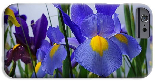 Yellow Bearded Iris iPhone Cases - Blue Purple Iris Flowers Art Prints iPhone Case by Baslee Troutman Art Prints