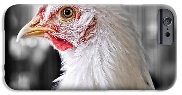 Chickens iPhone Cases - Blue Ribbon Chicken iPhone Case by Edward Fielding