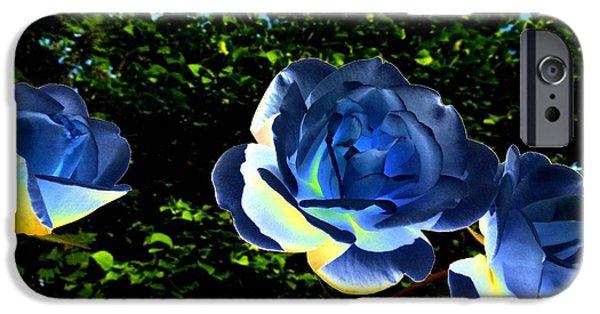 Floribunda iPhone Cases - Blue Roses iPhone Case by Will Borden