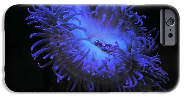 Steamer Lane iPhone Cases - Blue Sea Anemone iPhone Case by Ru Tover