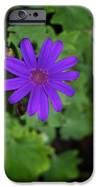 Senetti iPhone Cases - Blue Senetti iPhone Case by Bear Paw Resort Photography