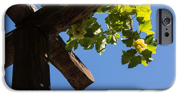 Grapevine Red Leaf iPhone Cases - Blue Sky Grape Harvest - Thinking of Fine Wine iPhone Case by Georgia Mizuleva