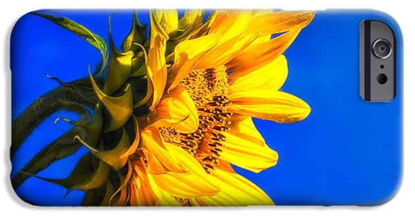 Sunflowers Photographs iPhone Cases - Blue Sky Sunshine Sunflower iPhone Case by Bob Orsillo