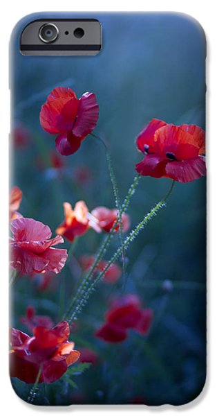 Poppies iPhone Cases - Blue Summer III iPhone Case by Magda  Bognar
