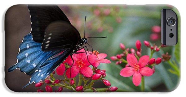 Blue Swallowtail iPhone Cases - Blue Swallowtail Butterfly  iPhone Case by Saija  Lehtonen