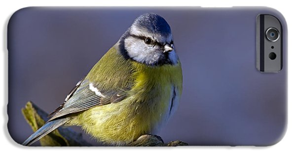 Animals Photographs iPhone Cases - Blue Tit in the blue iPhone Case by Torbjorn Swenelius