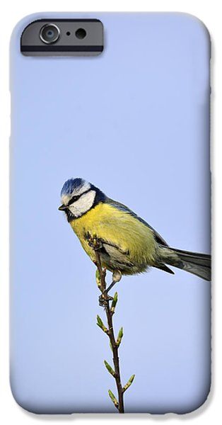 Young Mixed Media iPhone Cases - Blue Tit iPhone Case by Toppart Sweden
