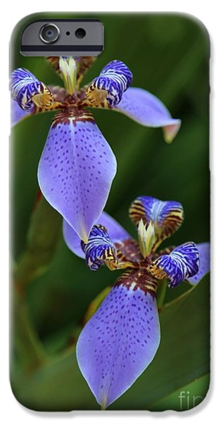 Blue Walking Iris iPhone Case by Carol Groenen