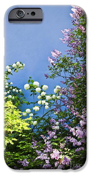 Lilac iPhone Cases - Blue wall with flowers iPhone Case by Elena Elisseeva