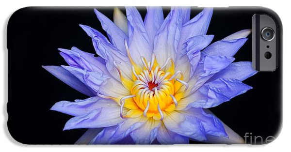 Nature Center Pond iPhone Cases - Blue Water Lily Blast... iPhone Case by Rob Luzier