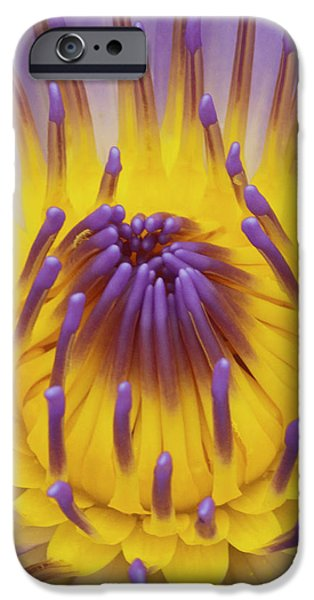 Blue Water Lily iPhone Case by Heiko Koehrer-Wagner