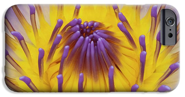 Water Lilly iPhone Cases - Blue Water Lily iPhone Case by Heiko Koehrer-Wagner