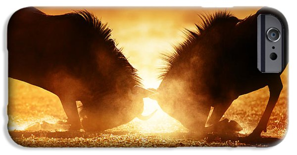Close iPhone Cases - Blue wildebeest dual in dust iPhone Case by Johan Swanepoel