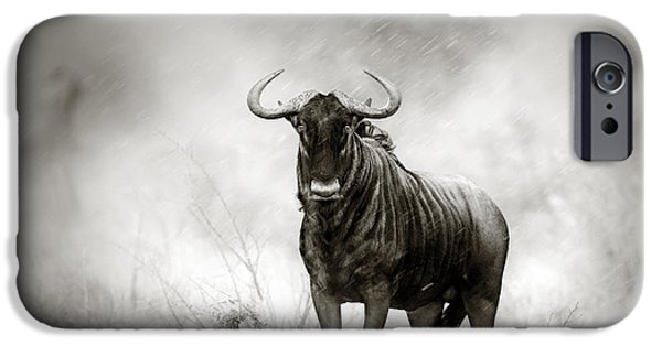 Solitude Photographs iPhone Cases - Blue Wildebeest in rainstorm iPhone Case by Johan Swanepoel