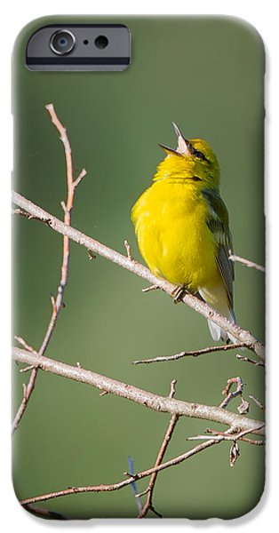 Warbler iPhone Cases - Blue-Winged Warbler iPhone Case by Bill  Wakeley