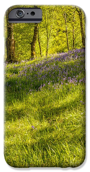 Dappled Light Photographs iPhone Cases - Bluebell Flowers iPhone Case by Amanda And Christopher Elwell