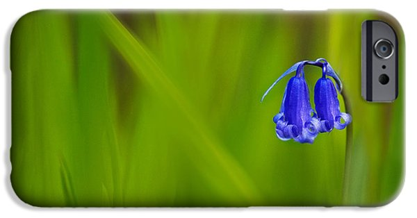 Fauna iPhone Cases - Bluebell iPhone Case by Janet Burdon