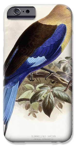 Animal Drawings iPhone Cases - Bluebellied Roller iPhone Case by Johan Gerard Keulemans