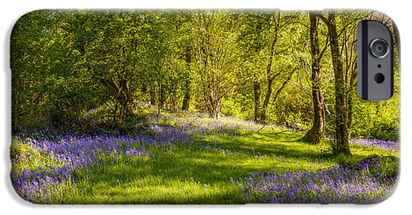 Dappled Light Photographs iPhone Cases - Bluebells iPhone Case by Amanda And Christopher Elwell