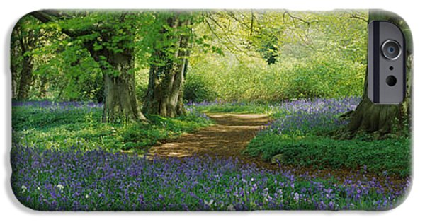 Meadow Photographs iPhone Cases - Bluebells In A Forest, Thorp Perrow iPhone Case by Panoramic Images