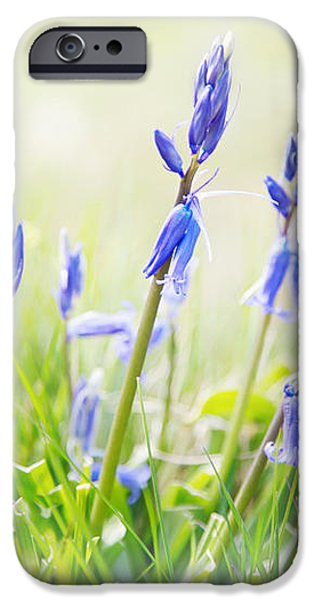 Bluebells on the Forest iPhone Case by Natalie Kinnear