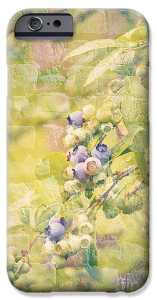 Blueberries Painted on the Wall iPhone Case by Alanna DPhoto