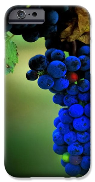 Metal Vineyard Print iPhone Cases - Blueberry Graps iPhone Case by Michael Pinette
