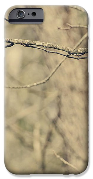 Bluebird and Sparrow iPhone Case by Heather Applegate