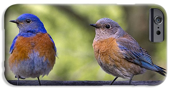 Birds iPhone Cases - Bluebird Couple iPhone Case by Jean Noren