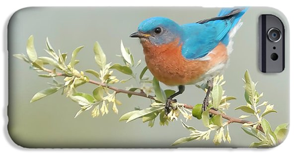 Bluebird iPhone Cases - Bluebird Floral iPhone Case by William Jobes