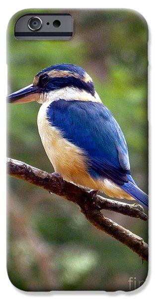 Mangrove Forest iPhone Cases - Bluebird in Suva Fiji iPhone Case by Barbie Corbett-Newmin