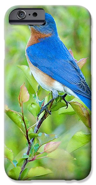 Meadow iPhone Cases - Bluebird Joy iPhone Case by William Jobes