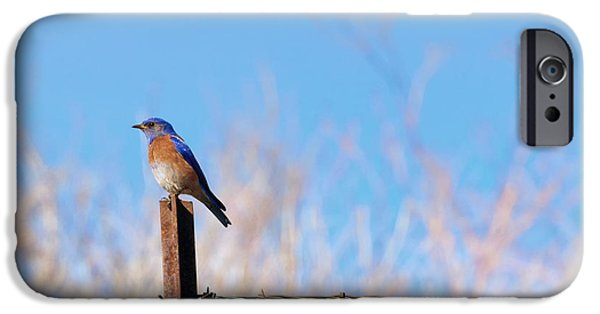 Bluebird iPhone Cases - Bluebird on a Post iPhone Case by Mike  Dawson