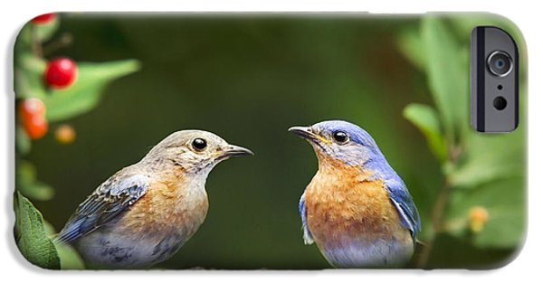 Bluebird iPhone Cases - Bluebird Pair iPhone Case by Christina Rollo