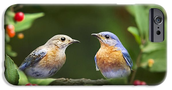Wild Animals iPhone Cases - Bluebird Pair iPhone Case by Christina Rollo