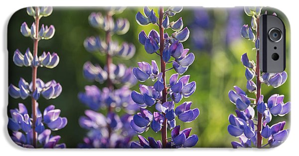 Close Focus Nature Scene iPhone Cases - Bluebonnet Lupine _lupinus iPhone Case by Carl Bruemmer