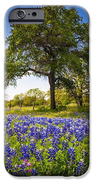 Nature Scene Photographs iPhone Cases - Bluebonnet Meadow iPhone Case by Inge Johnsson