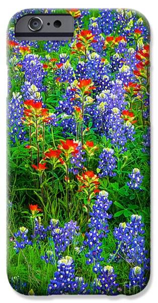 Solitude Photographs iPhone Cases - Bluebonnet Patch iPhone Case by Inge Johnsson