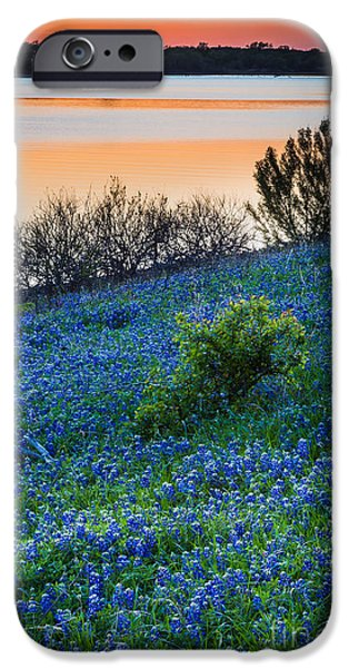 Mounds iPhone Cases - Grapevine Lake Bluebonnets iPhone Case by Inge Johnsson