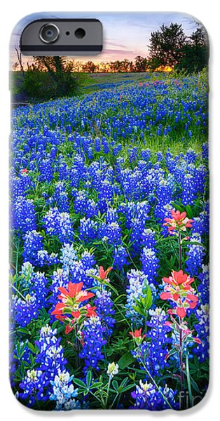 Pasture Scenes Photographs iPhone Cases - Bluebonnets Forever iPhone Case by Inge Johnsson