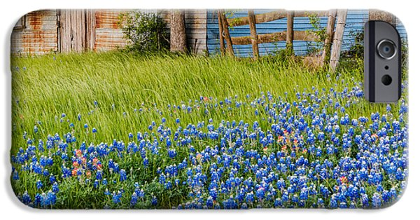 Old Barn iPhone Cases - Bluebonnets swaying gently in the wind - Brenham Texas iPhone Case by Silvio Ligutti