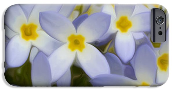 Maine iPhone Cases - Bluets 2 iPhone Case by Patsy Zedar