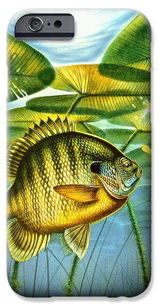 Jon Q Wright iPhone Cases - Blugill and lilypads iPhone Case by Jon Q Wright
