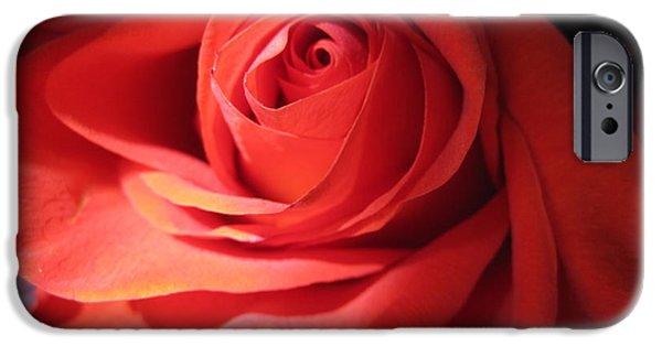 Flora Drawings iPhone Cases - Blushing Coral Rose iPhone Case by Tara  Shalton