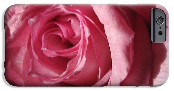 Flora Drawings iPhone Cases - Blushing Pink Rose 2 iPhone Case by Tara  Shalton