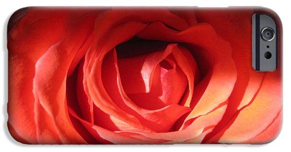 Flora Drawings iPhone Cases - Blushing Orange Rose 2 iPhone Case by Tara  Shalton