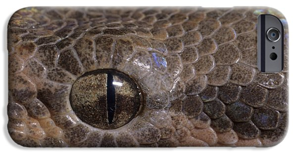 Boa Constrictor iPhone Cases - Boa Constrictor iPhone Case by Chris Mattison FLPA
