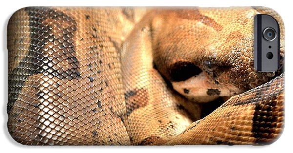 Creepy iPhone Cases - Boa Constrictor iPhone Case by Deena Stoddard